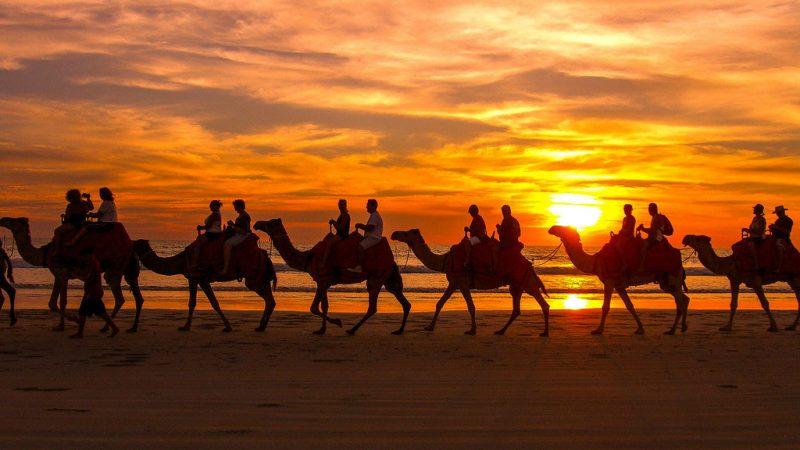 Broome camels on beach