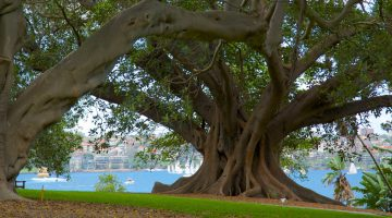 featured image nature in sydney